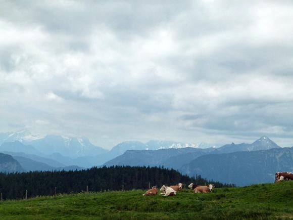 Kühe vor den noch teilweise schneebedeckten Bergen um Berchtesgaden