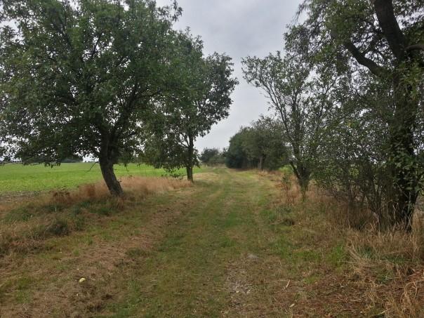 Alter Medinger Weg - Marsdorfer Rundweg