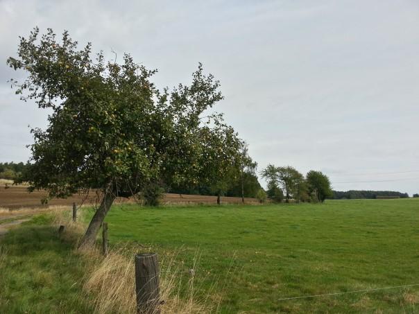 Wiese - Marsdorfer Rundweg