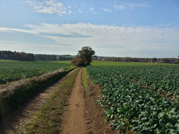 Weg nach Bärnsdorf