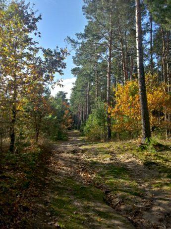 Weg auf die Heidehöhe