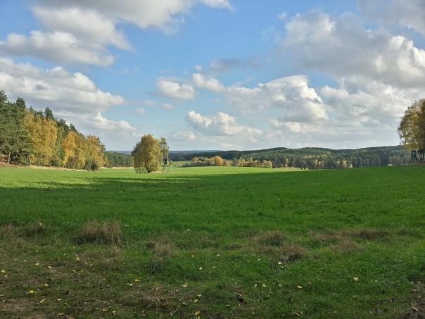 Blick nach Süden Richtung Strauch