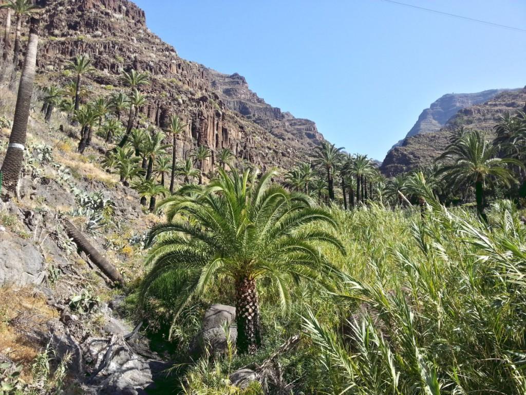Blick von El Guro in den Barranco
