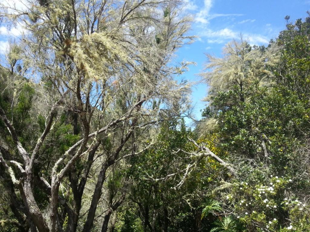 Baumheide und Gagelbaum