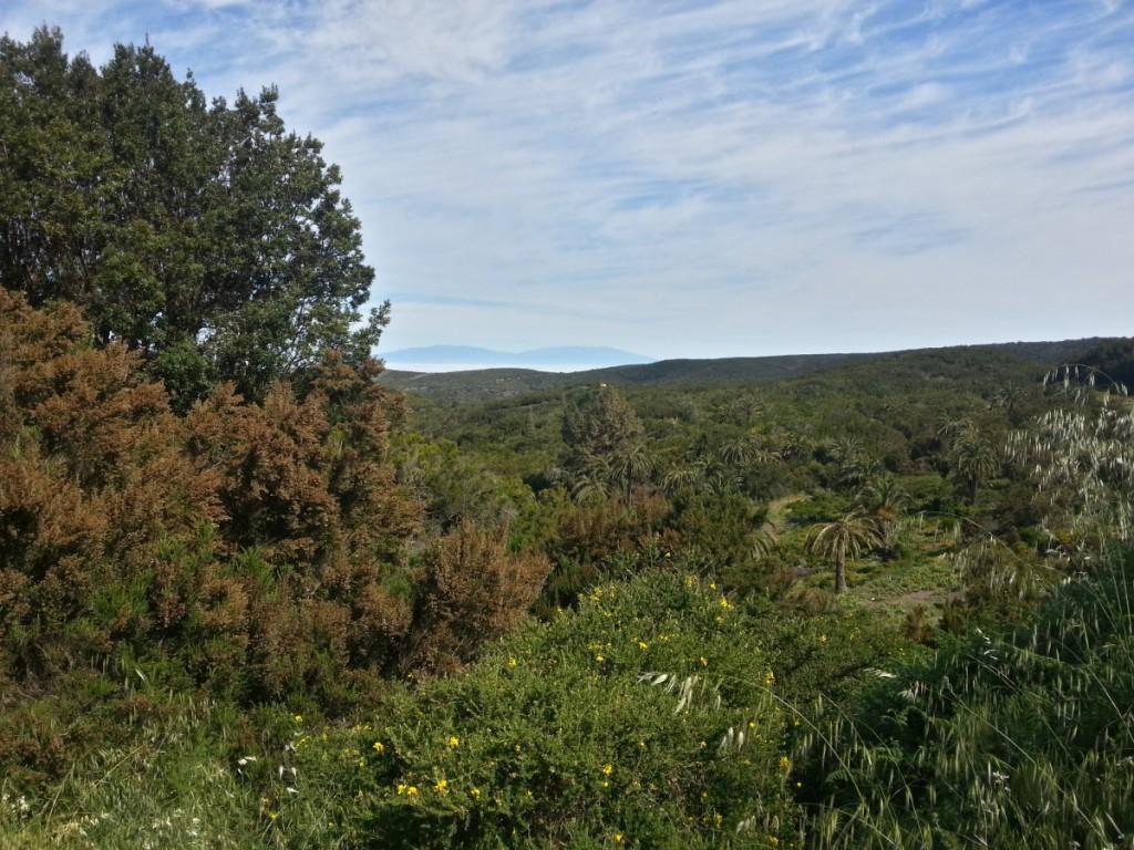 Blick vom Waldrand Richtung Arure