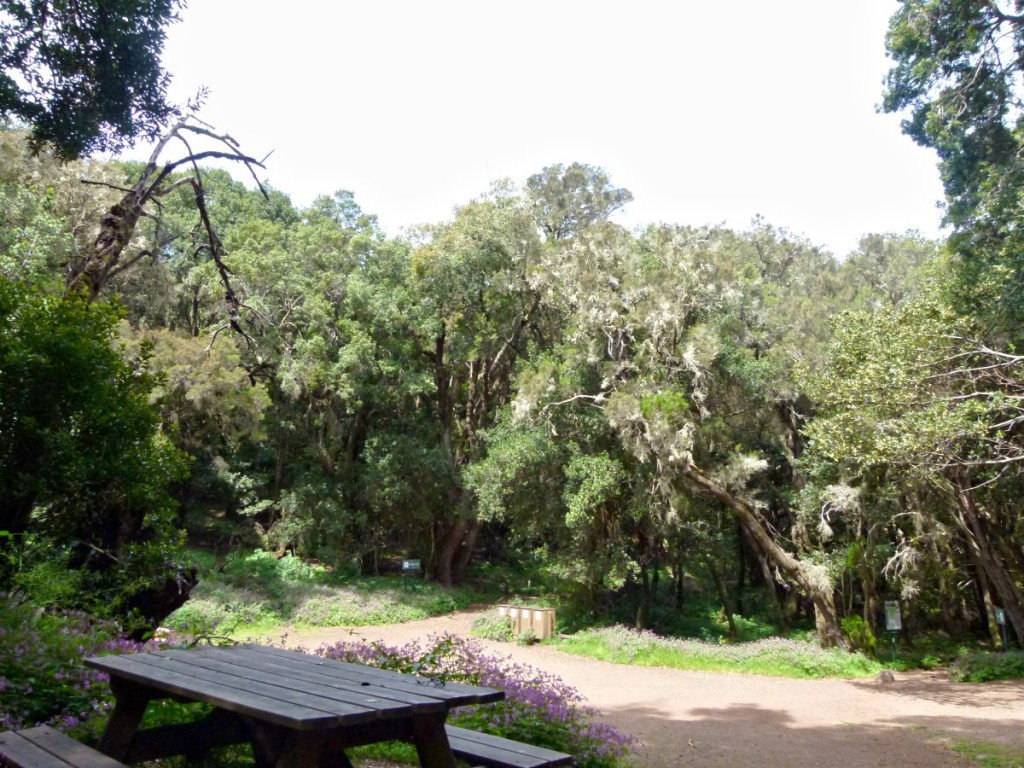Am Picknickplatz Jardín de Las Creces