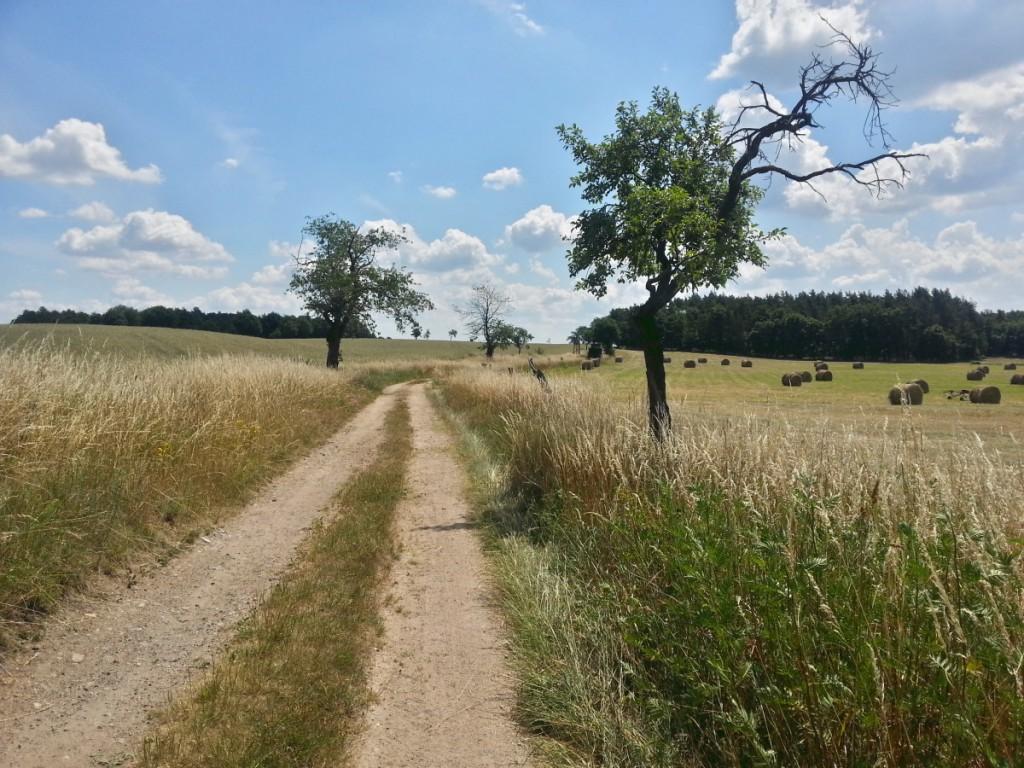 Landschaft bei Löbsal