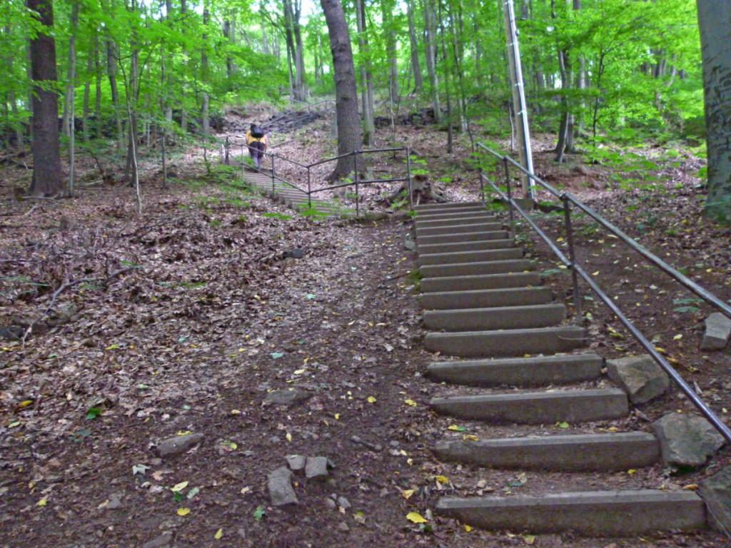 Im mittleren Teil des Treppenaufstiegs im Rieselgrund
