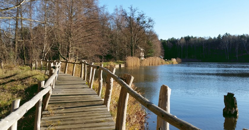 Königsbrücker Heide - Biberpfad