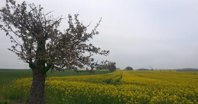 Landschaft bei Seifersdorf