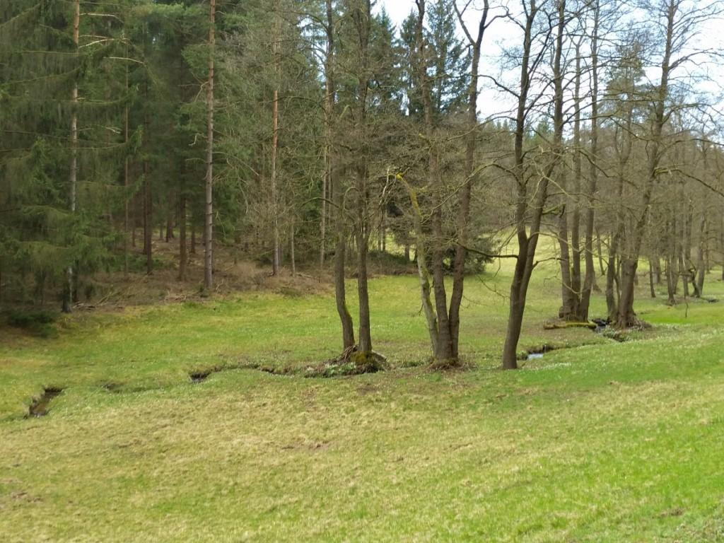 Im Naturschutzgebiet Zeidelweide