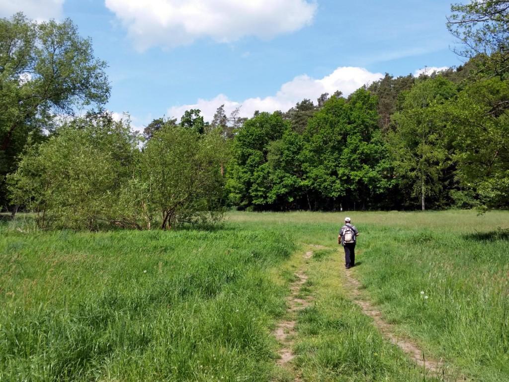 Weiter geht's über einen Wiesenweg und durch Laubwald Richtung Großdittmannsdorf