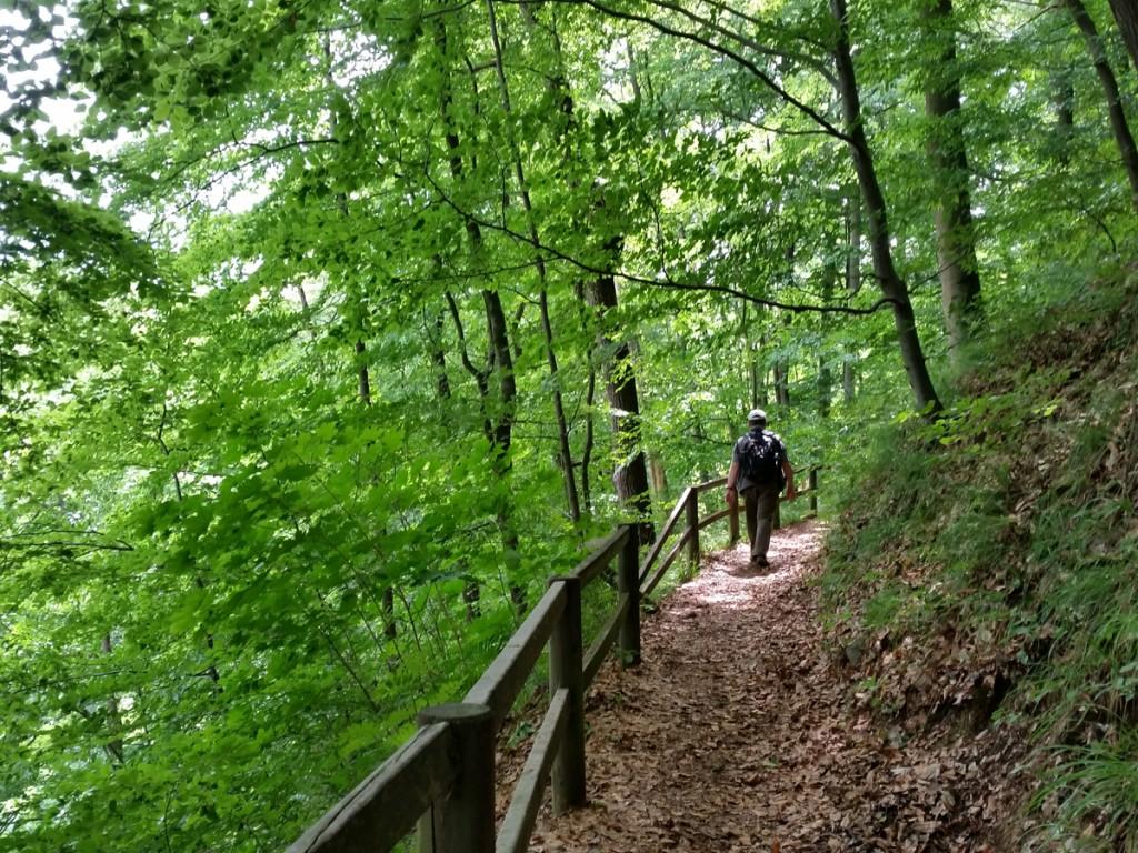 Auf dem Wanderweg im Seifersdorfer Tal: