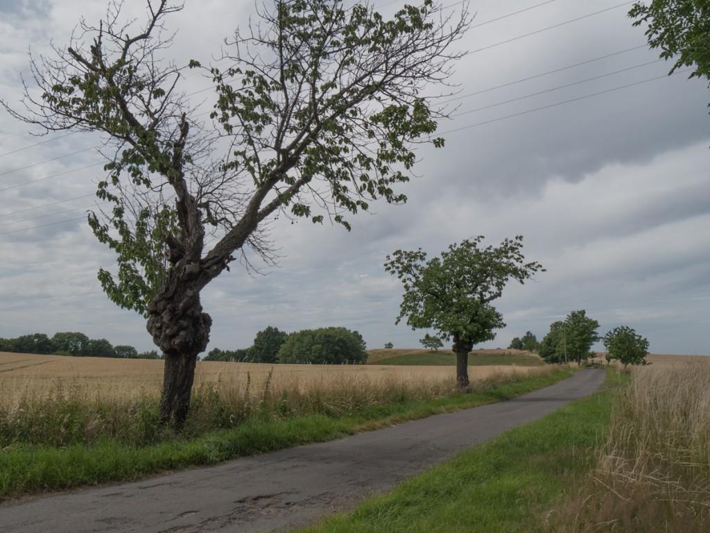 Auf der Wildberger Straße