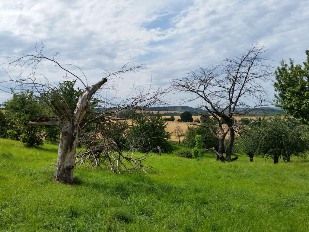 Wiesenlandschaft vor Wildberg