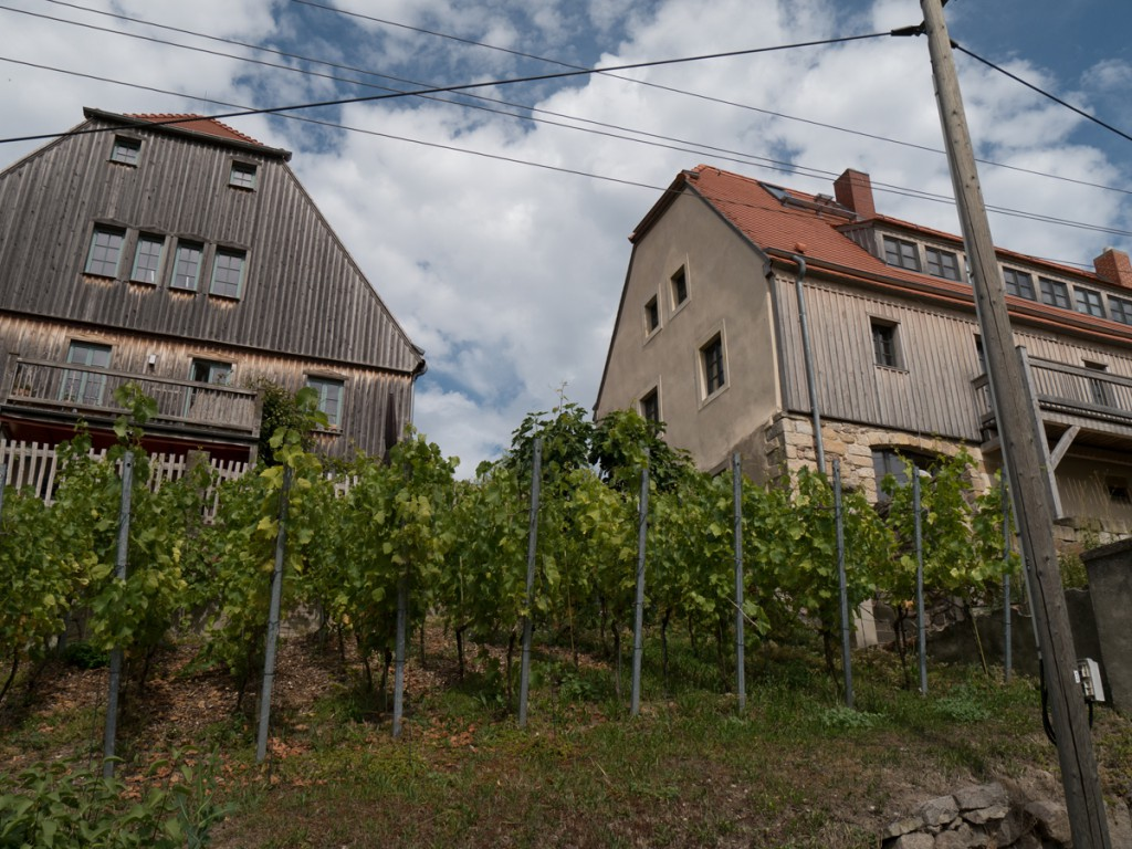 Weinanbau in Wildberg