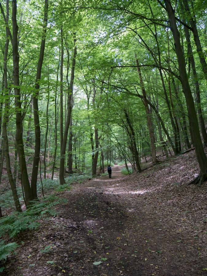 Weg entlang des Kleditschbaches