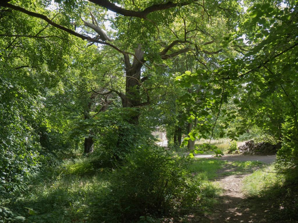 Wanderweg kurz vor dem Schloss in Weistropp