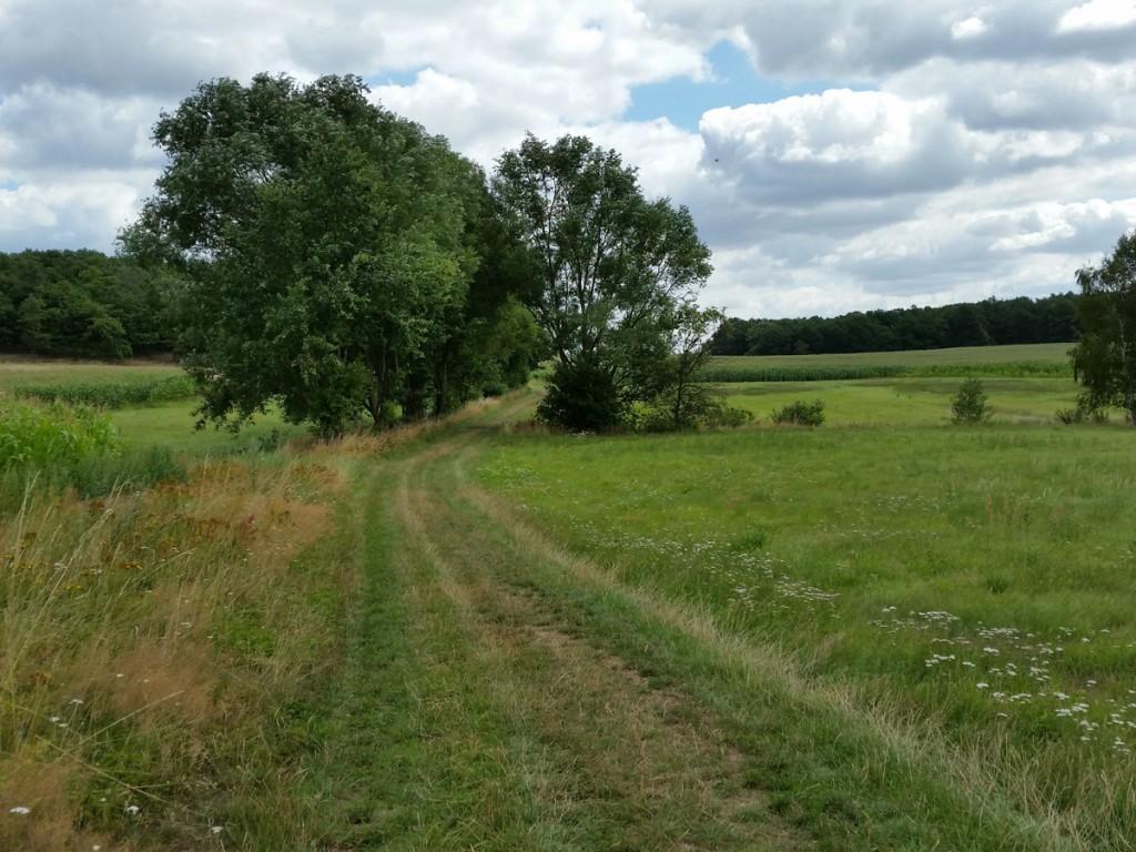 Weg durch die Kleinkuppenlandschaft