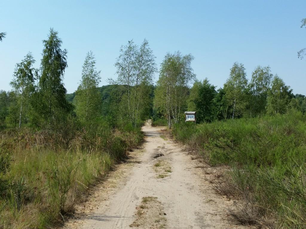 Weg in der Dünenlandschaft auf dem Heller