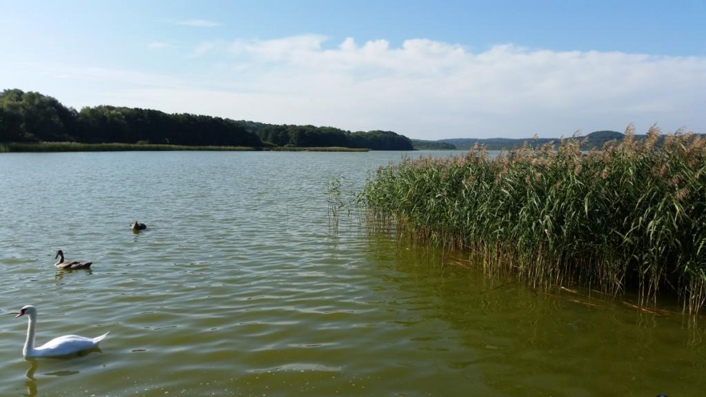 Am Schmachter See in Binz