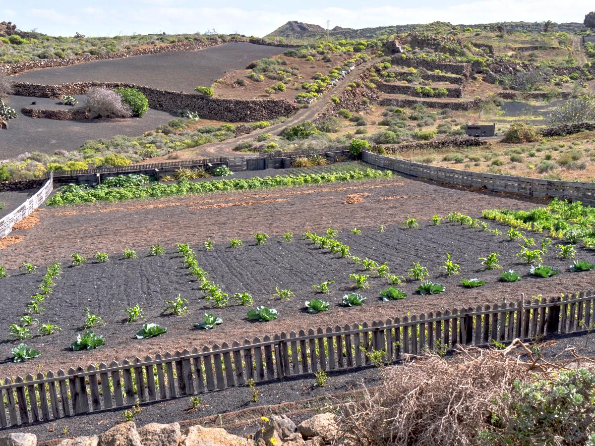 Quemada de Órzola, Blick über verschiedene Anbaukulturen