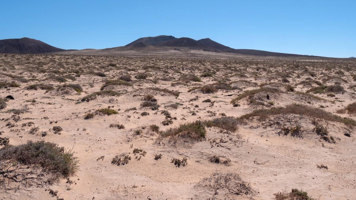 Blick über die Sanddünen von El Jable