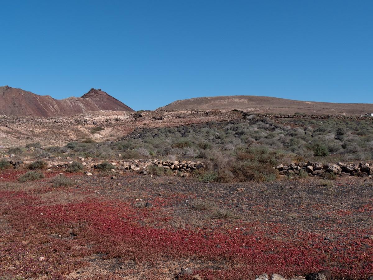 Kurz vor Erreichen des Ortes Sóo noch ein Blick über Kristall-Mittagsblumen zur Caldera Trasera