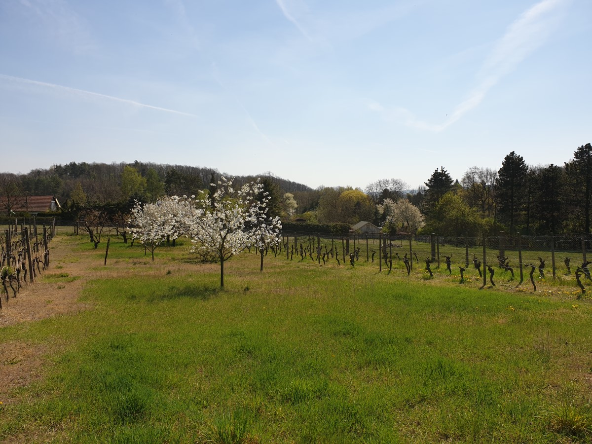 Weinbauanlage an der Neulandgasse