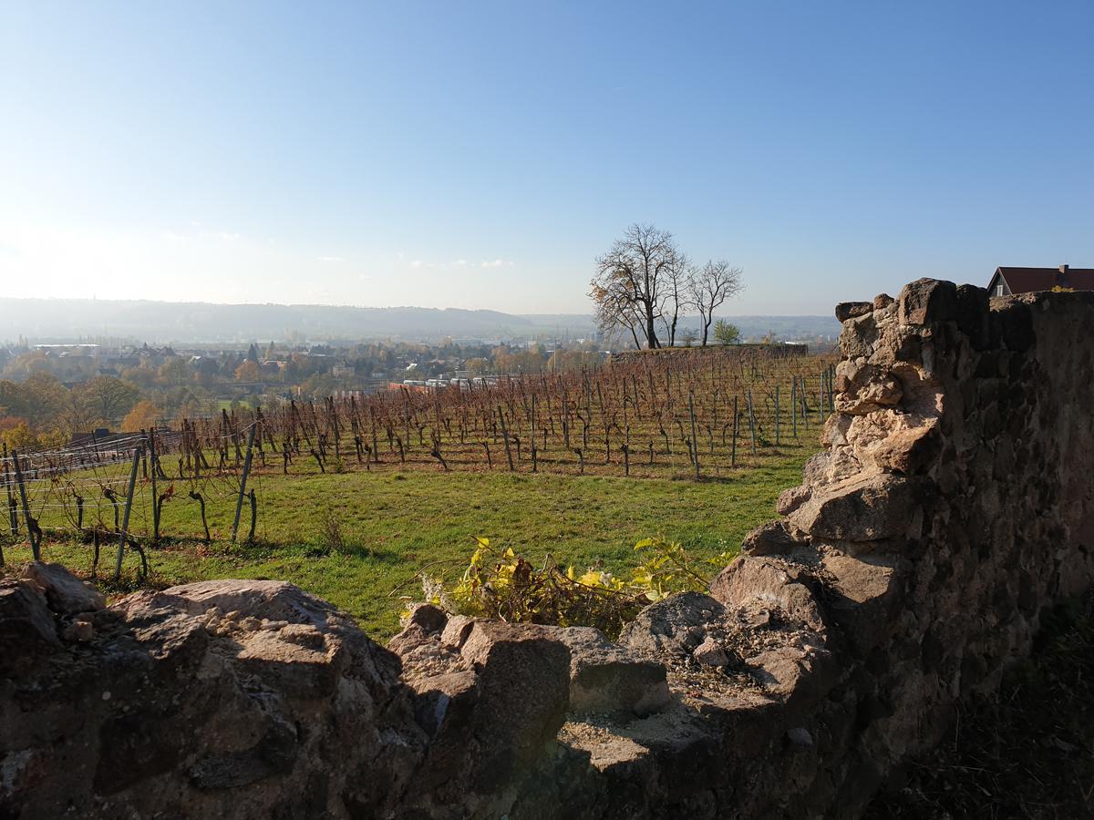 Los geht´s entlang des Knollenwegs und herbstlicher Weinberge mit Blick nach Radebeul.