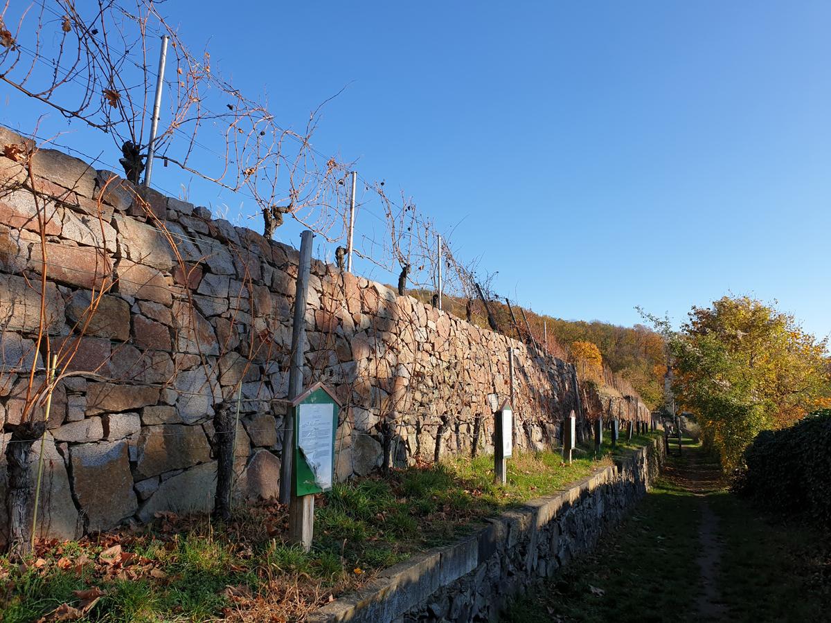 Weinlehrpfad im Herbst