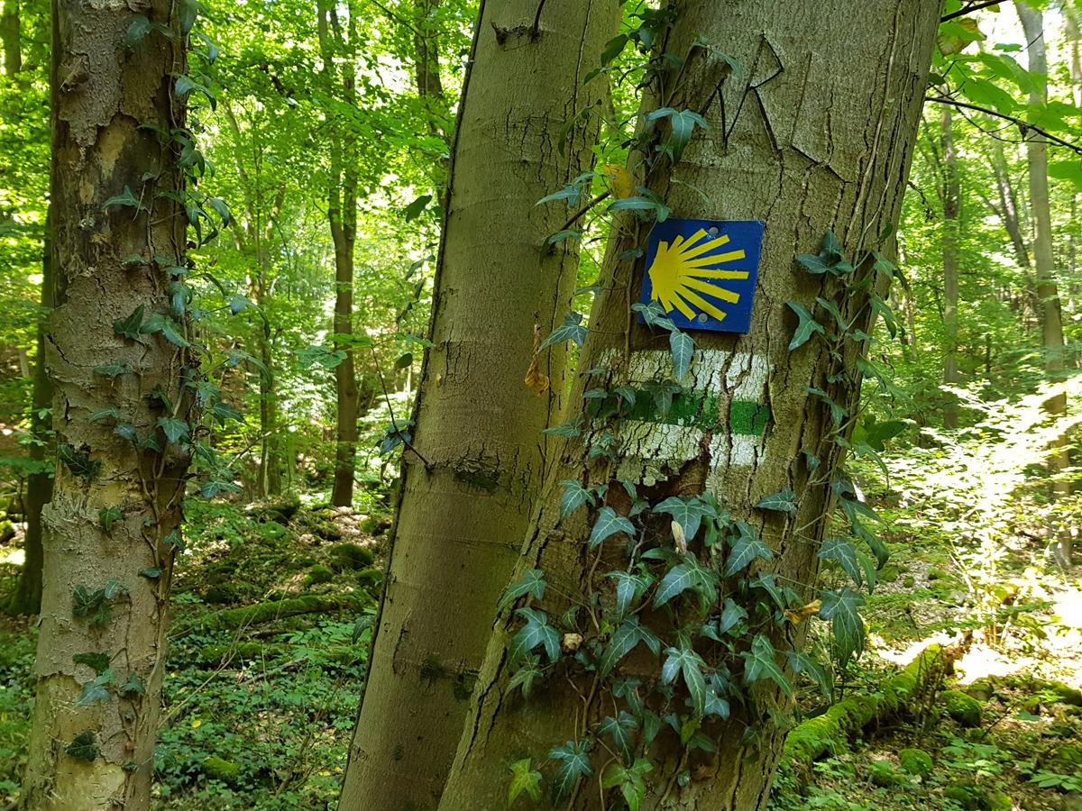 Rückweg durch das Saubachtal entlang des Sächsischen Jakobswegs