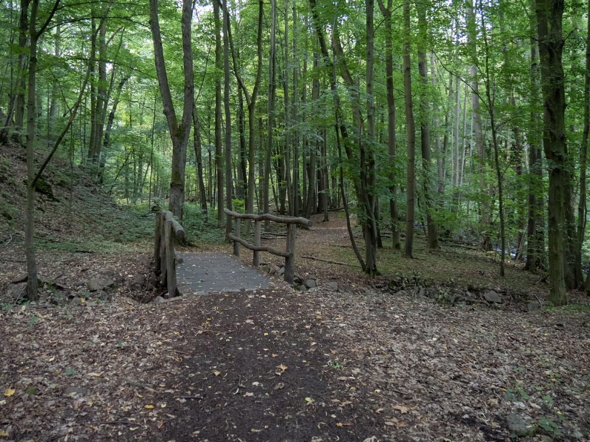 Weg im Saubachtal