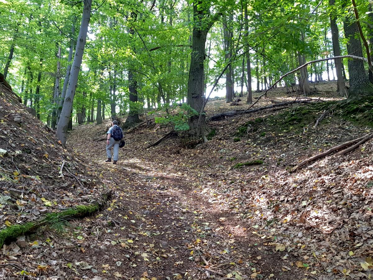 Waldweg hinauf auf die Höhe