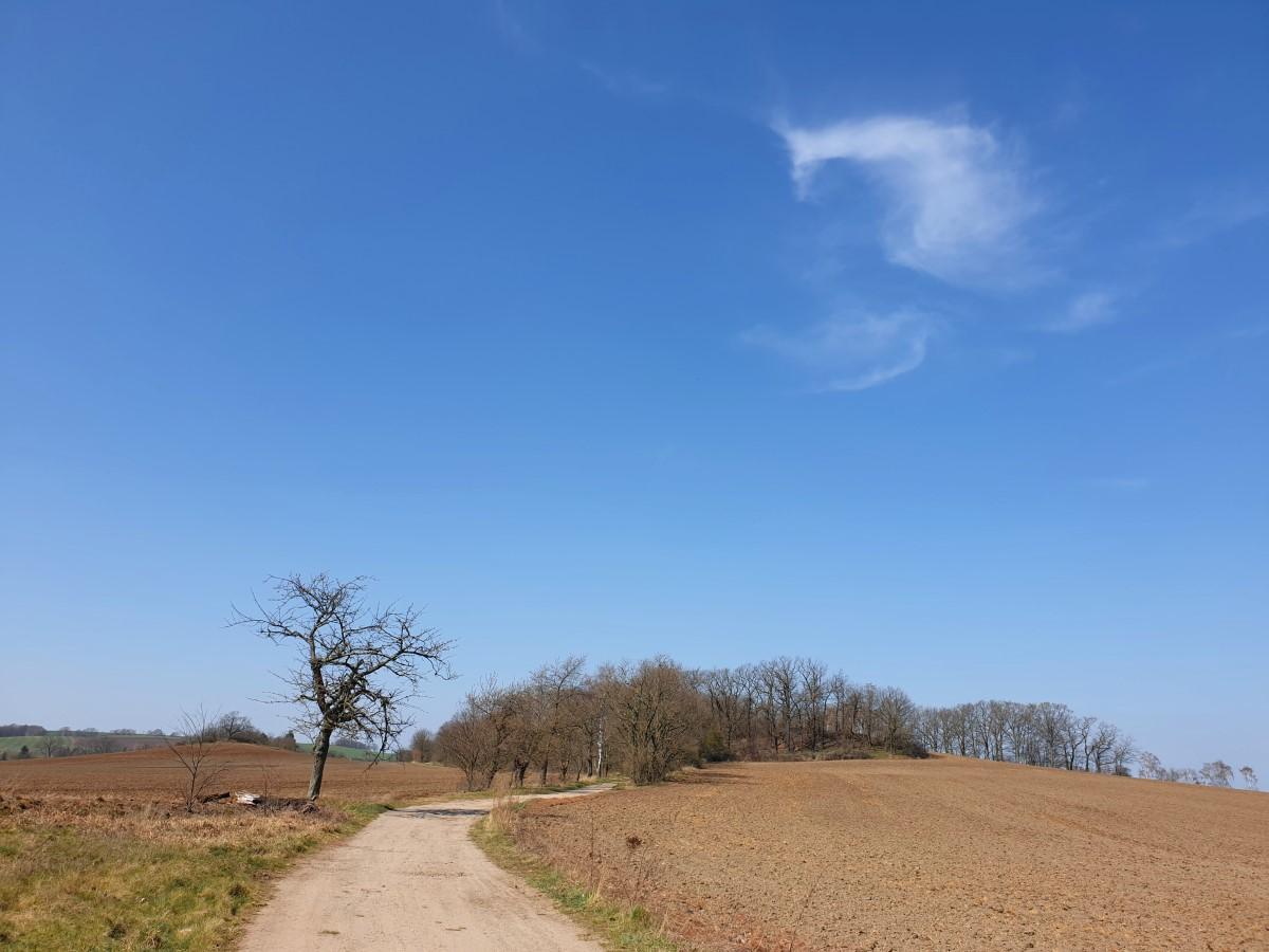 Abwärts auf dem Weg zwischen Knochenberg und Weinberg