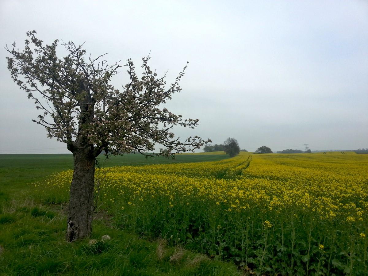 Landschaft am Hermsdorfer Weg