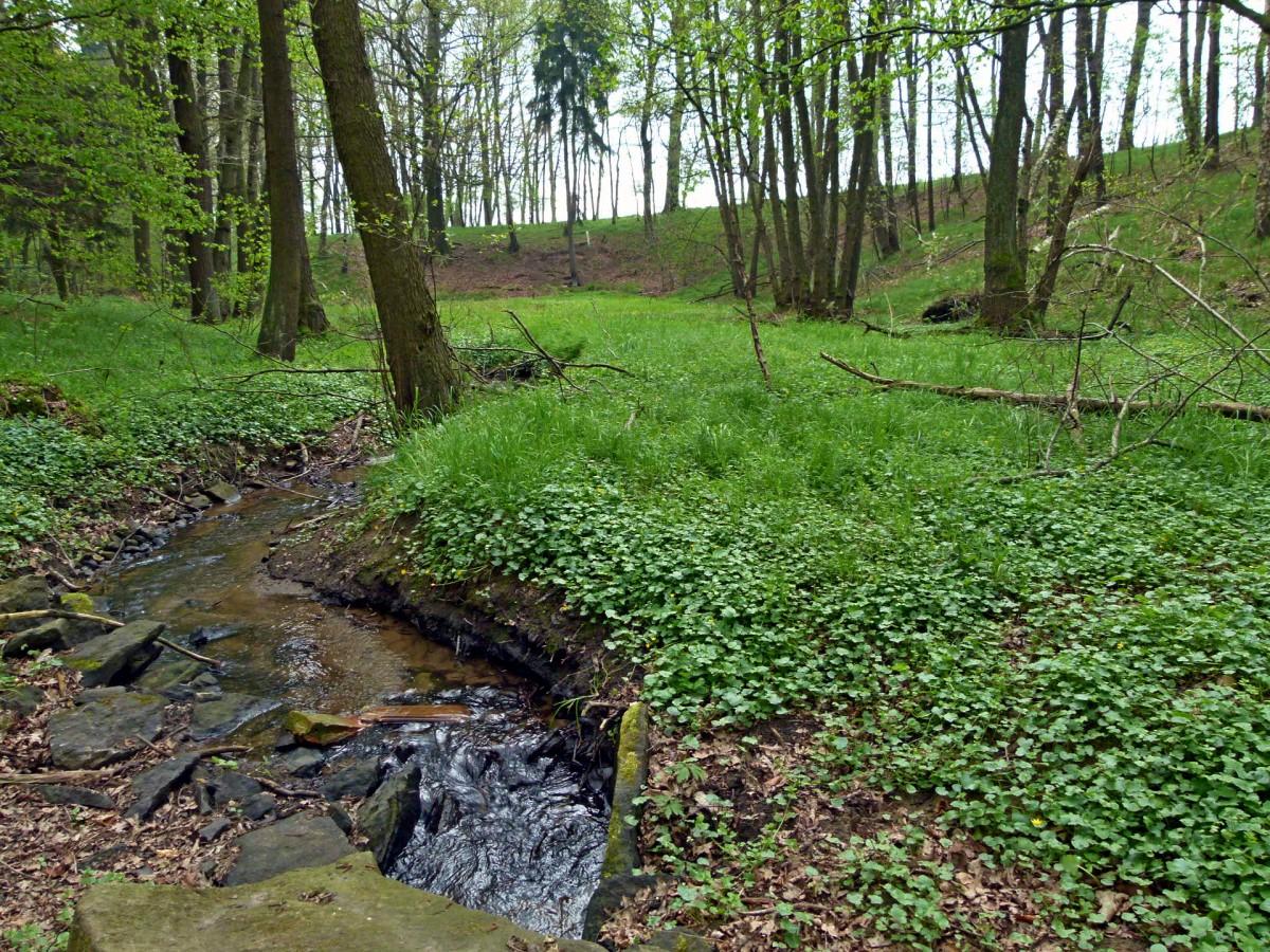 Der Wiesenbach wird überquert.