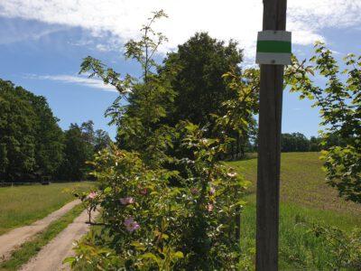 Wegmarkierung für den Seifersdorfer Tal-Wanderweg