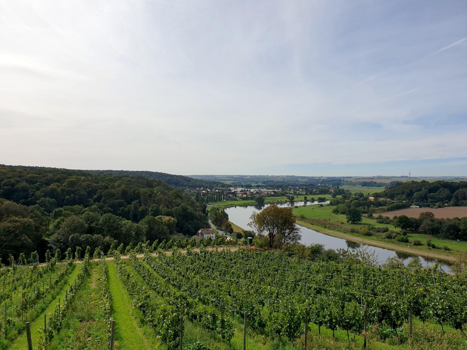 Schönste Weinsicht 2020 Sachsen