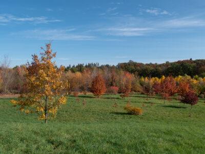 Forstpark Tharandt