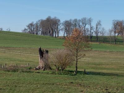 Blick zum Bornhausberg