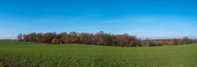 Bauernbusch