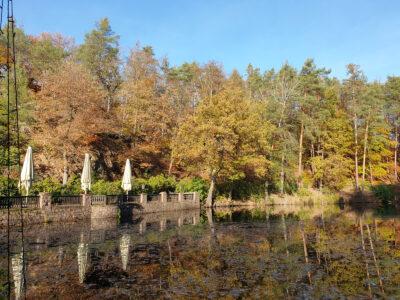 Buschmühlenteich im Herbst
