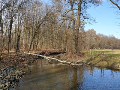 Elligastbach am Kleinen Gabelwehr