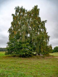 Großsteingrab 5