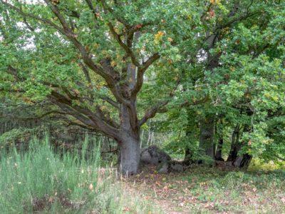 Großsteingrab 6