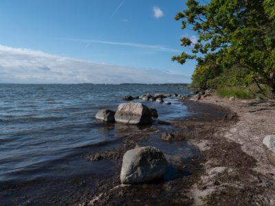 Ufer an den Wasser-Eichen