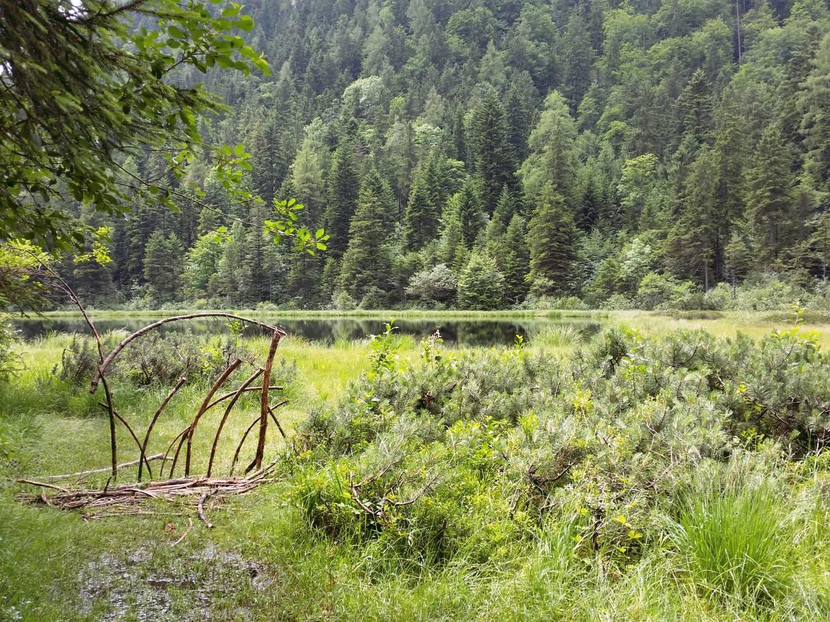 Blick über das Schwingrasenmoor am Krottensee