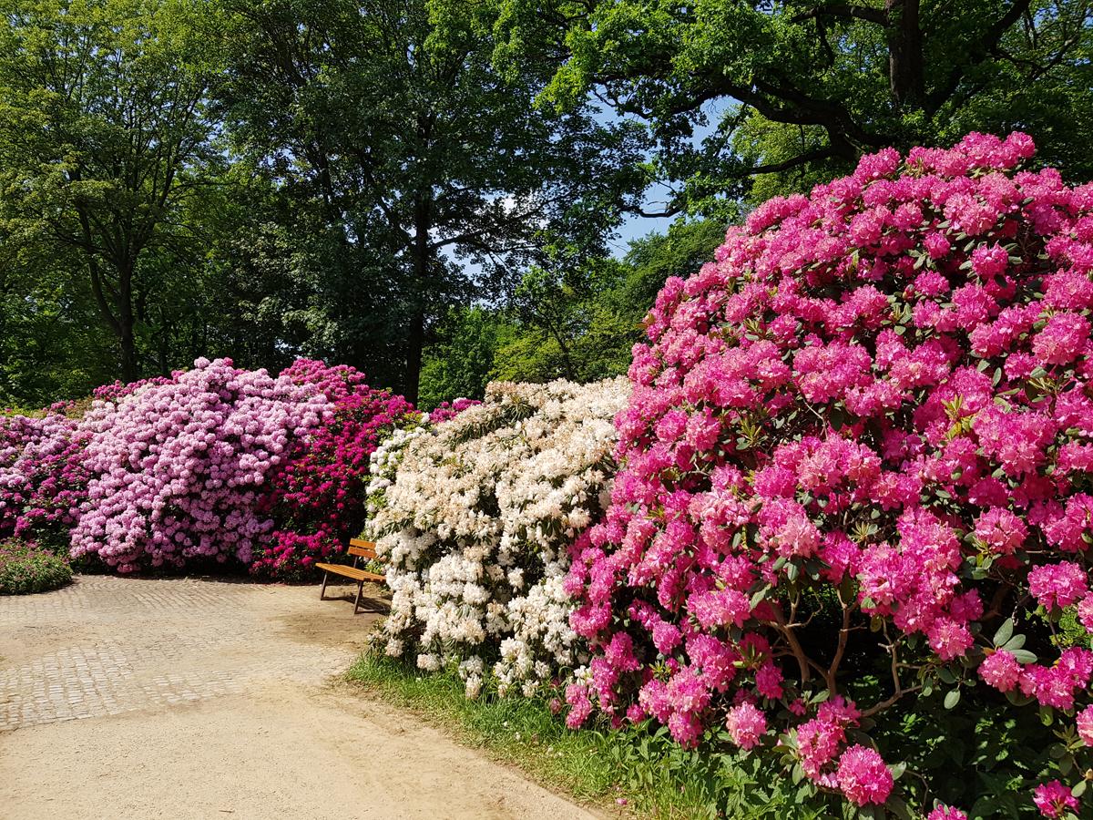 Auf dem Rundweg im Rhododendronpark