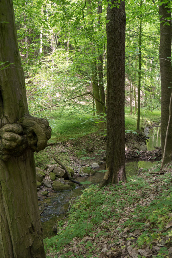 Am Regenbach